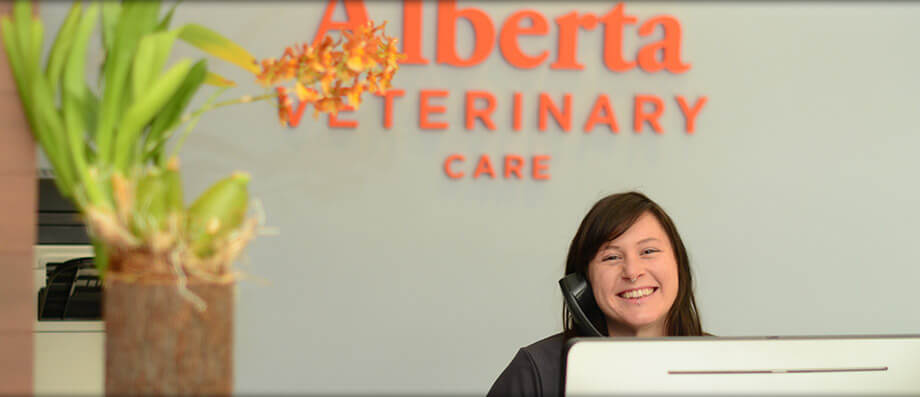Veterinarians in Downtown Portland OR